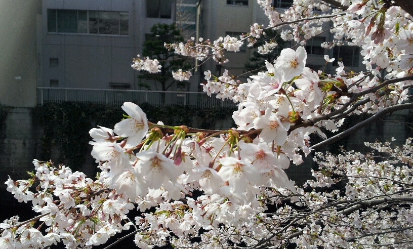 2012-04-06 09.15.22_resized.jpg